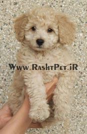 سگهای کوچک و خانگی  مطالب آرشیو - برگه 11